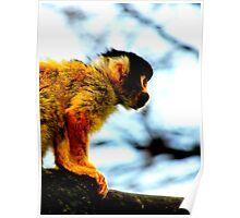 The Youngest Squirrel Monkey Poster