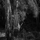 Mono, Tree Tones (Chadwick Lakes Malta) by Edwin  Catania