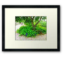 Another Corner Of The Irish Organic Garden Framed Print