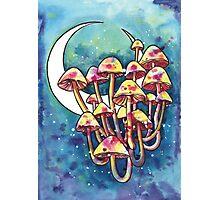 Mushroom Patch Photographic Print
