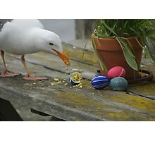 Easter Egg Gull Thief Photographic Print