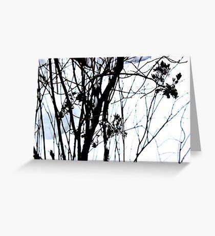 Lilac Snow  Greeting Card