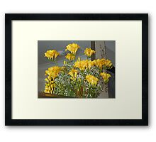 Golden Fuchsias Framed Print