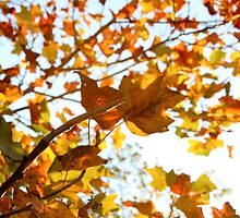 a small autumn greeting  by Fledermaus