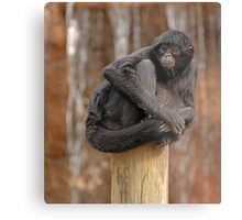 Pole Topper Metal Print