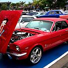Colour is Everything........Mustang ! by Roy  Massicks