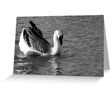 CHINESE SWAN GOOSE IN GREY SCALE Greeting Card