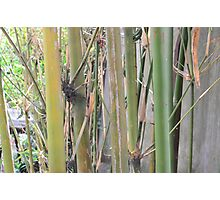 Bamboo & Earth Photographic Print