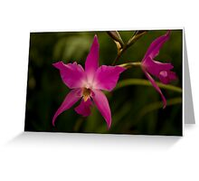 Hobart Botanical Gardens Flower  Greeting Card