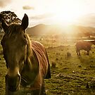 The Royalla Horses by Sheaney