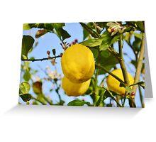 Growings Lemons in the sun Greeting Card