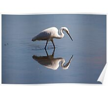 reflection great egret Poster