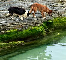 Good....I Have  A Friend To Help....Now...How Are WE Going To Get The Ball (Please Read Description) by Noel Elliot