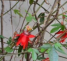 Love Flower by fotosvn