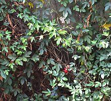 Secrect  Flowers garden by fotosvn
