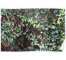 Secrect  Flowers garden Poster