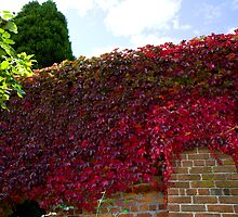 Red wall of autumn  by eisblume