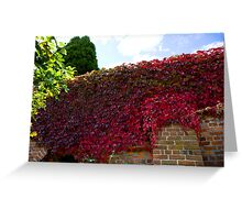 Red wall of autumn  Greeting Card