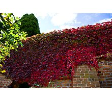 Red wall of autumn  Photographic Print