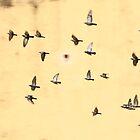 Jaipur Birds by Francois Ward