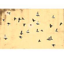 Jaipur Birds Photographic Print