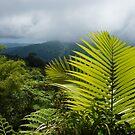 Tropical Rainforest - Jungle Green and Rain Clouds by Georgia Mizuleva