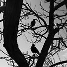 Two crows in Port Stephens by Dentanarts