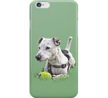 Jack : Jack Russel Terrier x Staffy iPhone Case/Skin