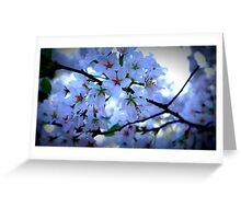 Kenwood Blossoms Greeting Card