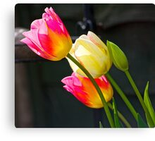 Colourful Tulips Canvas Print