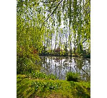 Through the Willow Trees Photographic Print
