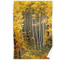 Fall Colors at Snowmass Poster