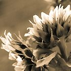 Sepia Sunflowers 3 by Melinda Anderson