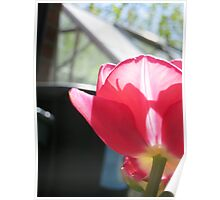 The Tulip and The Greenhouse Poster