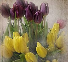 Spring Tulips by vigor