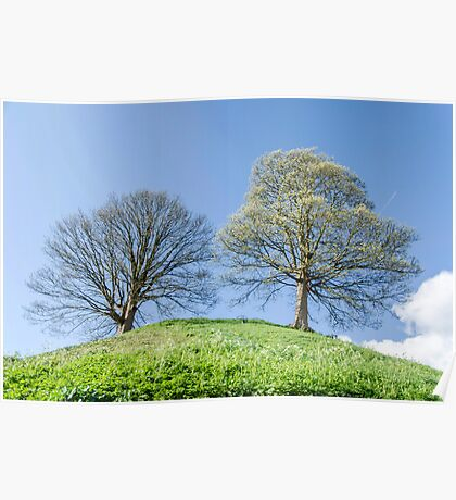Couple of Trees on the Hill Landscape Poster