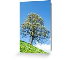Tree on The Hill Sping Landscape Greeting Card