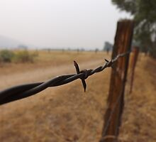 Barb Wire Fence by lornakay