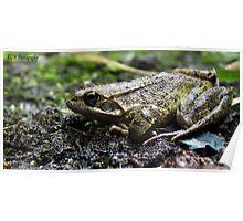 Urbex Frog Poster