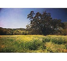 The Magic Field Photographic Print
