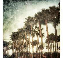 Palm Groves  Photographic Print