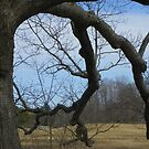 Big Old Tree by MaryinMaine