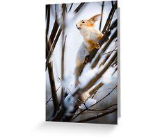 Red Squirrel 1 Greeting Card