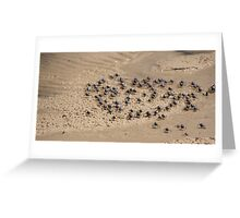soldier crabs Greeting Card