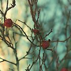 Red Winter Berry by Heidi Hesse