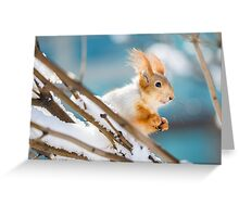 Red Squirrel 4 Greeting Card