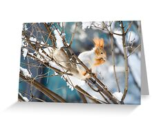 Red Squirrel 7 Greeting Card