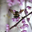 Busy Bumble by Wviolet28