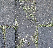 Pavement 5 by FrancisD