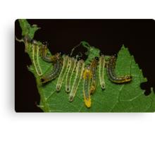 Caterpillar Gems Canvas Print